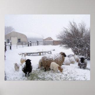 Nieve de las ovejas en abril impresiones