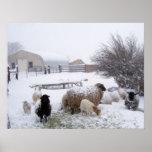 Nieve de las ovejas en abril póster