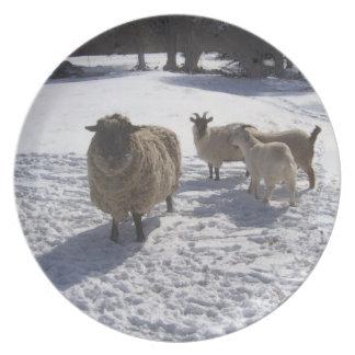 Nieve de las ovejas y de las cabras en abril plato