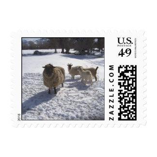Nieve de las ovejas y de las cabras en abril sello
