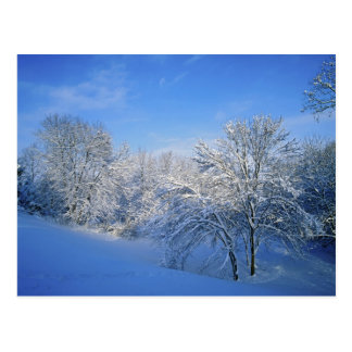 Nieve de registro en Louisville, Kentucky Tarjeta Postal