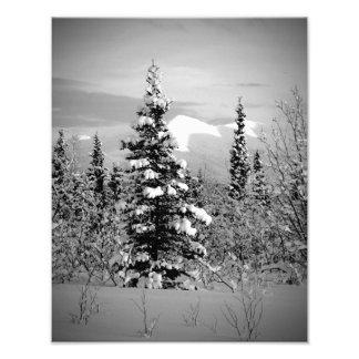 Nieve del invierno impresiones fotograficas