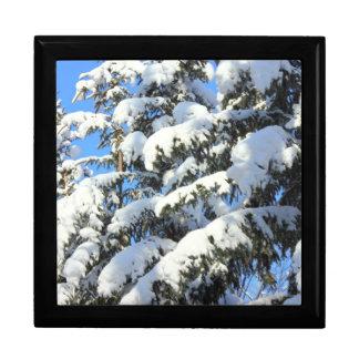 Nieve en árboles de hoja perenne caja de regalo