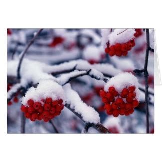 Nieve en bayas europeas de la ceniza de montaña, U Tarjeta De Felicitación
