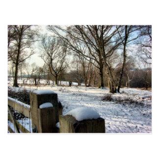 Nieve en los plumones tarjeta postal