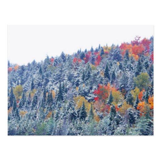 Nieve en otoño postal