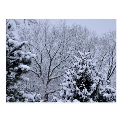 Nieve en Pinetree Postales
