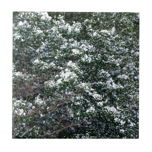 Nieve en un árbol de acebo tejas  ceramicas