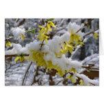 Nieve Notecard de la primavera Felicitaciones
