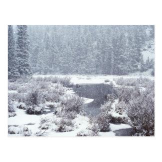 Nieve rocosa del invierno de Mtn Tarjetas Postales