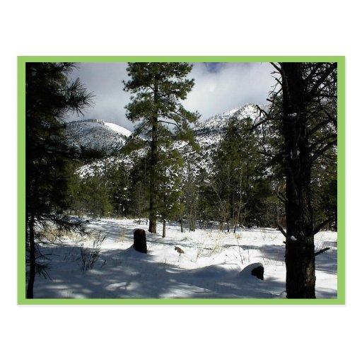 Nieves en asta de bandera en Arizona y en Mt. Elde Tarjeta Postal
