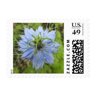 Nigella Blue Green Blooming Flower Postage
