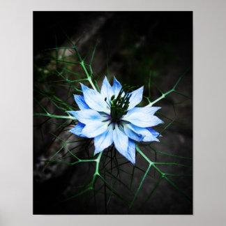 Nigella Flower Poster