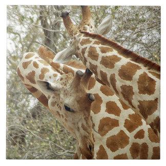 Niger, Koure, dos jirafas en arbustos en el oeste Azulejo Cuadrado Grande