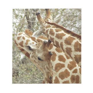 Niger, Koure, dos jirafas en arbustos en el oeste Bloc