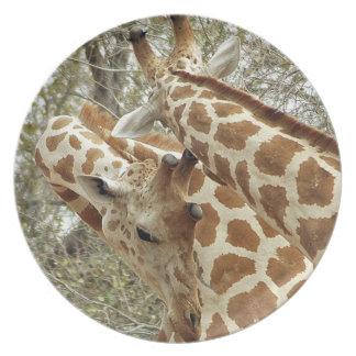 Niger, Koure, dos jirafas en arbustos en el oeste Plato Para Fiesta