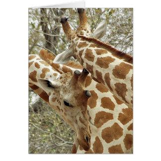 Niger, Koure, dos jirafas en arbustos en el oeste Tarjeta De Felicitación