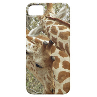 Niger, Koure, two Giraffes in bushes in the west iPhone SE/5/5s Case