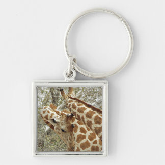 Niger, Koure, two Giraffes in bushes in the west Silver-Colored Square Keychain