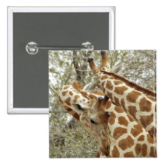 Niger, Koure, two Giraffes in bushes in the west Pinback Button