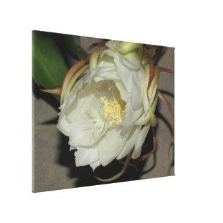 Night Bloom - Canvas