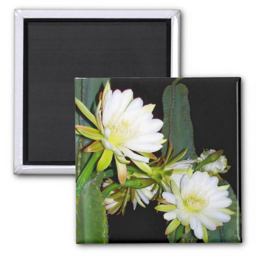 Night Bloomer 2 Inch Square Magnet