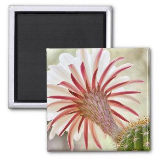 Night blooming cactus flower magnet