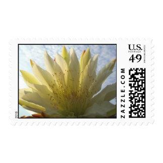 Night blooming cactus flower postage