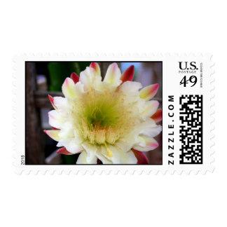 Night-blooming cactus postage