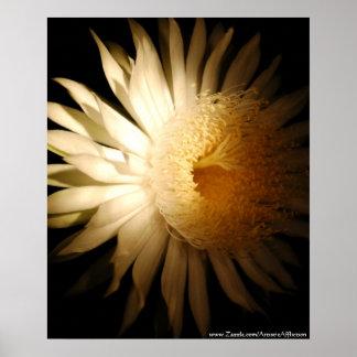 Night Blooming Cactus - Poster