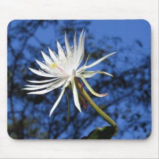 Night Blooming Cerus Flower Mouse Pad