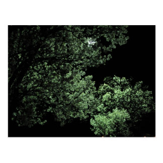 Night Blossom Postcard
