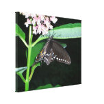 Night Butterfly Black Swallowtail Nature Photo Canvas Print