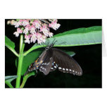 Night Butterfly Black Swallowtail Nature Photo Card