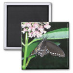 Night Butterfly Black Swallowtail Nature Photo Magnet
