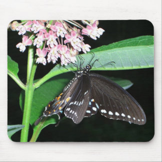 Night Butterfly Black Swallowtail Nature Photo Mouse Pad