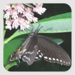 Night Butterfly Black Swallowtail Nature Photo Square Sticker