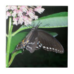 Night Butterfly Black Swallowtail Nature Photo Tile