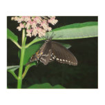 Night Butterfly Black Swallowtail Nature Photo Wood Wall Art