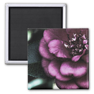 Night Camellia 2 Inch Square Magnet
