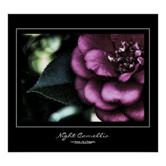 Night Camellia Black Border Poster