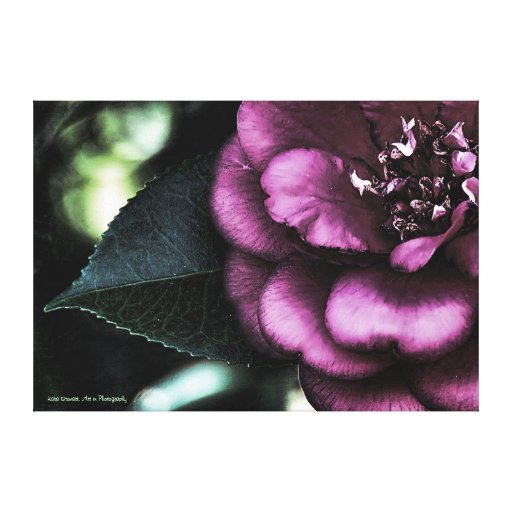 Night Camellia Wrapped Canvas Print