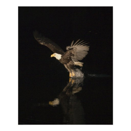 NIGHT EAGLE POSTER