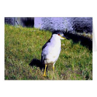 Night Heron Card