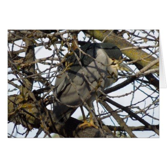 Night Heron in Tree Card