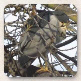 Night Heron in Tree Coaster