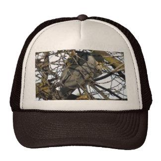 Night Heron in Tree Hat