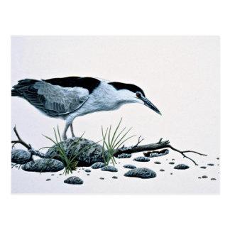 Night heron postcard