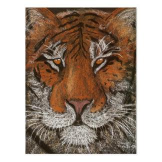 night tiger postcard