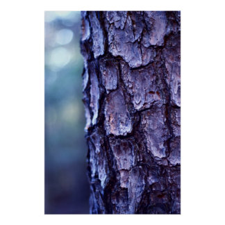 Night Time Tree Bark Poster